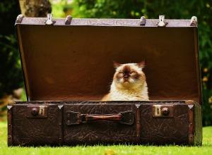 luggage-1643010_1920 (1)