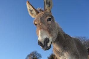 donkey-2996965_1920